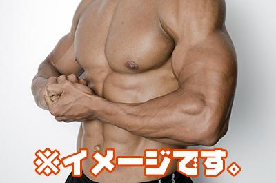 勃起と筋肉